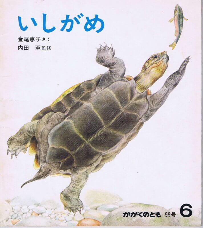 いしがめ かがくのとも 通巻99号 (1977年6月号)