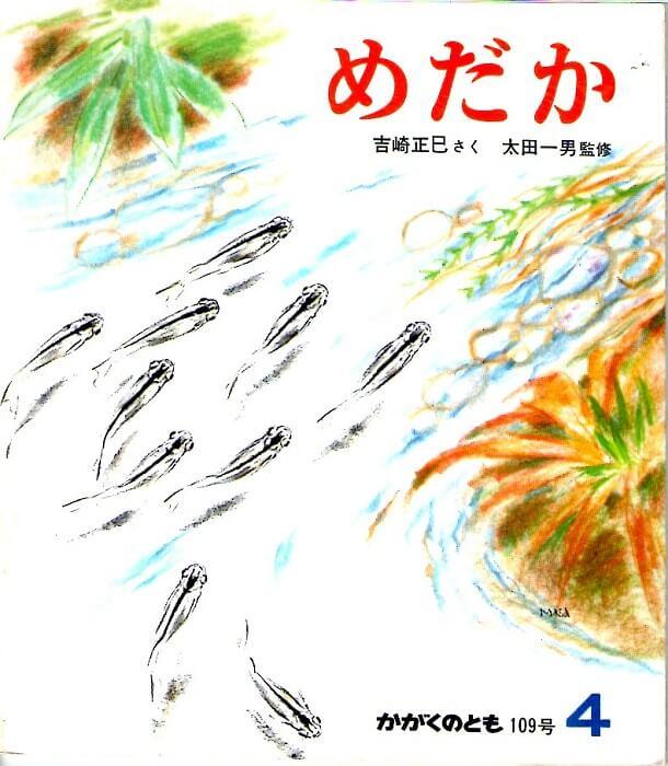 めだか かがくのとも 通巻109号 (1978年4月号)