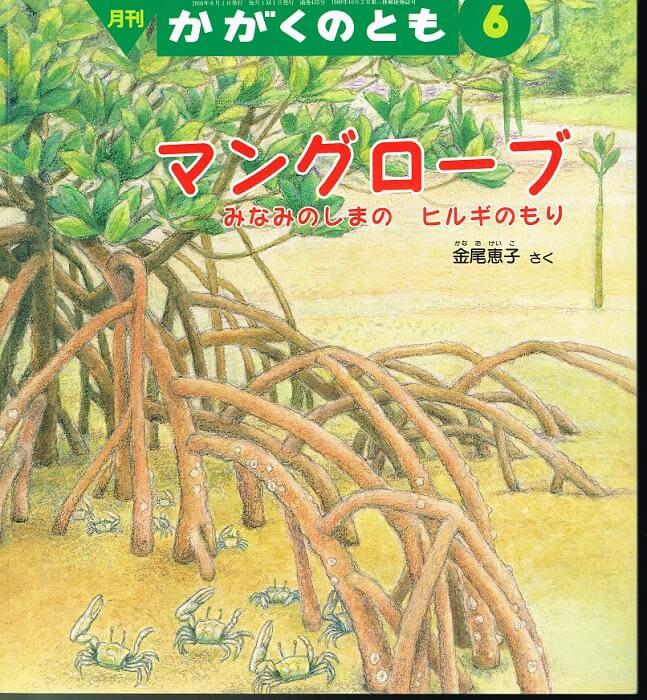 マングローブ みなみのしまの ヒルギのもり かがくのとも 通巻435号 (2005年6月号) ※折り込みふろくあり