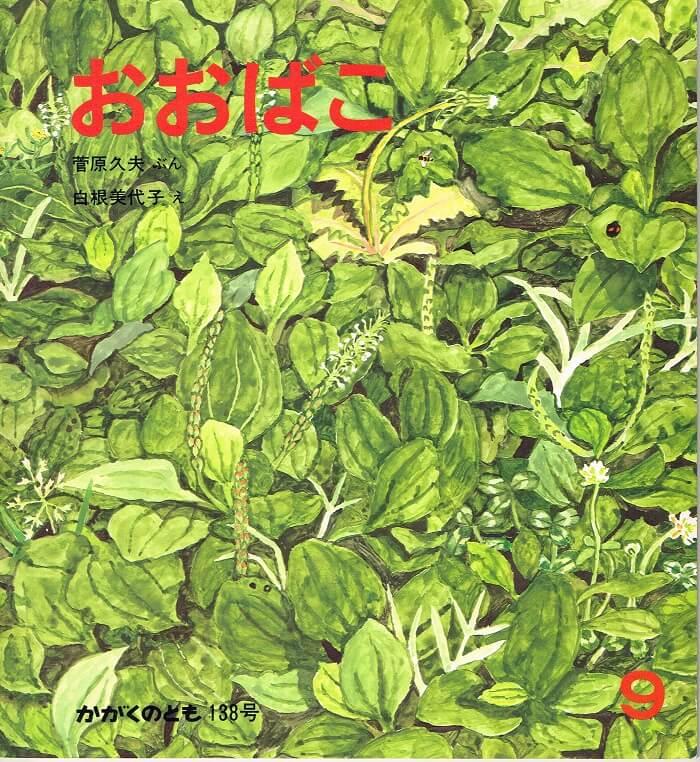 おおばこ かがくのとも 通巻188号 (1980年9月号)